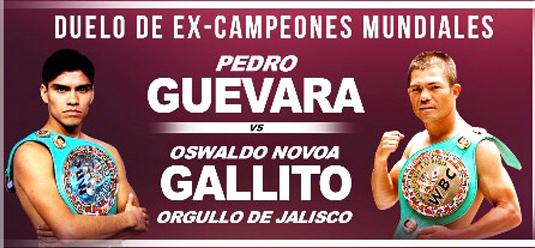 GUEVARA-GALLITO
